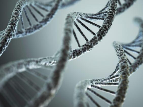 Генетика влияет на нашу фигуру, или как добиться идеальных форм?